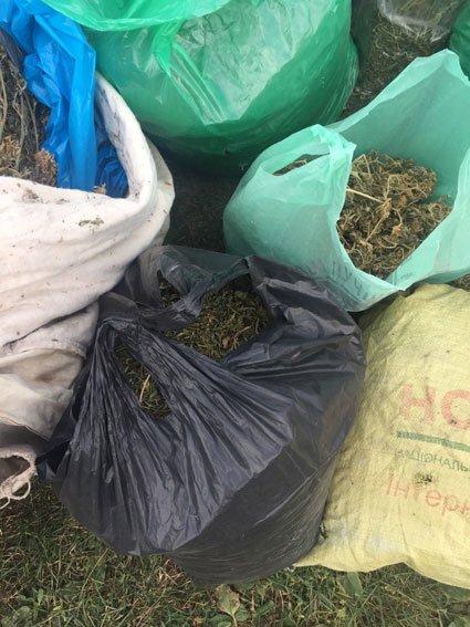 Урожай элитной конопли достался черниговской милиции (фото) - фото 1