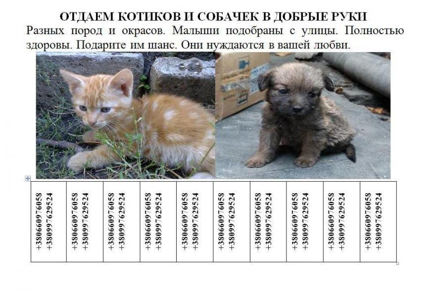 Красноармейские защитники животных предлагают каждому горожанину принять участие в судьбе бездомных котят и щенков (фото) - фото 1