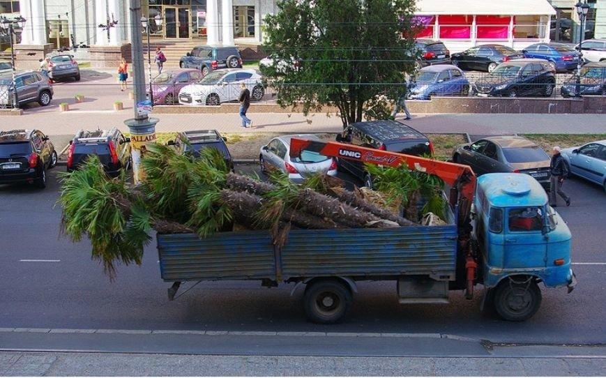 Одесская Аркадия осталась без пальм (ФОТО) (фото) - фото 1