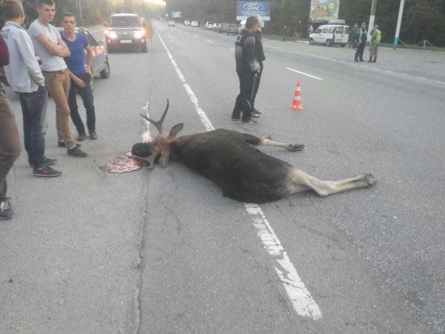 Сьогодні біля Вінниці жінка збила лося (фото+відео) (фото) - фото 2