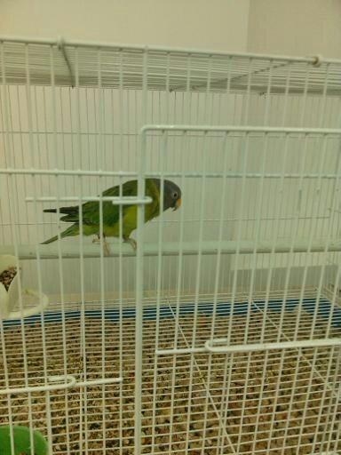 Обзор. Выставка больших попугаев. (фото) - фото 4