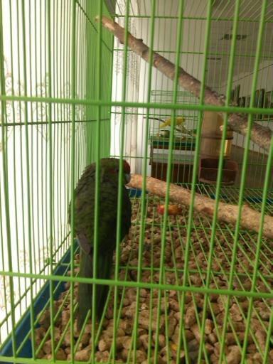 Обзор. Выставка больших попугаев. (фото) - фото 5