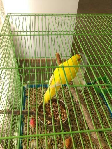 Обзор. Выставка больших попугаев. (фото) - фото 3