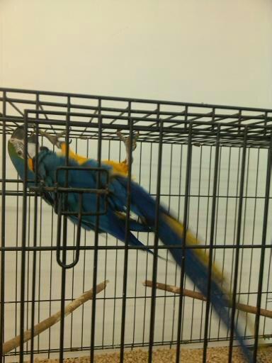 Обзор. Выставка больших попугаев. (фото) - фото 2