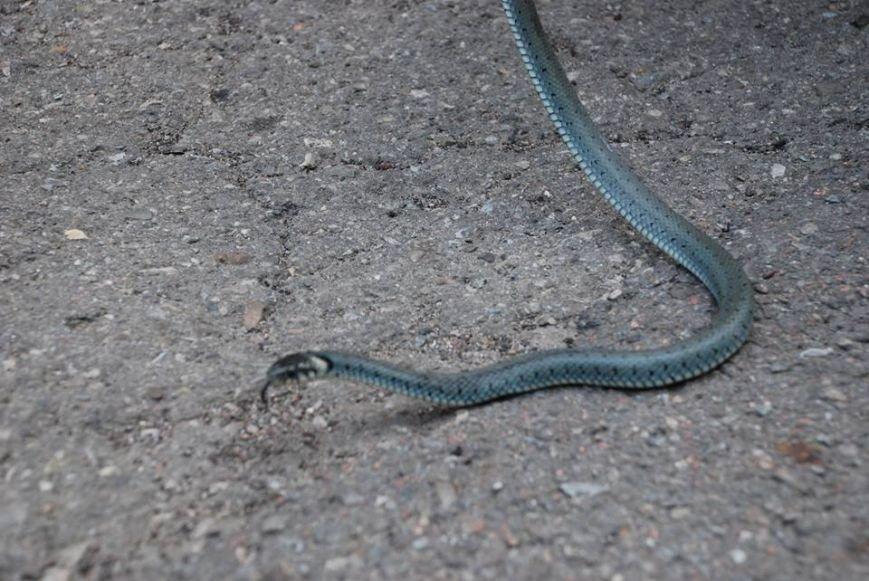 У багатоповерхівці Франківська знайшли змію (ФОТО), фото-2