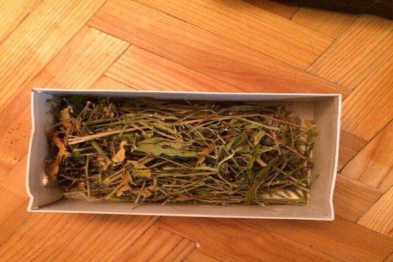 На Львівщині чоловік на власному подвір'ї вирощував коноплю (ФОТО) (фото) - фото 4