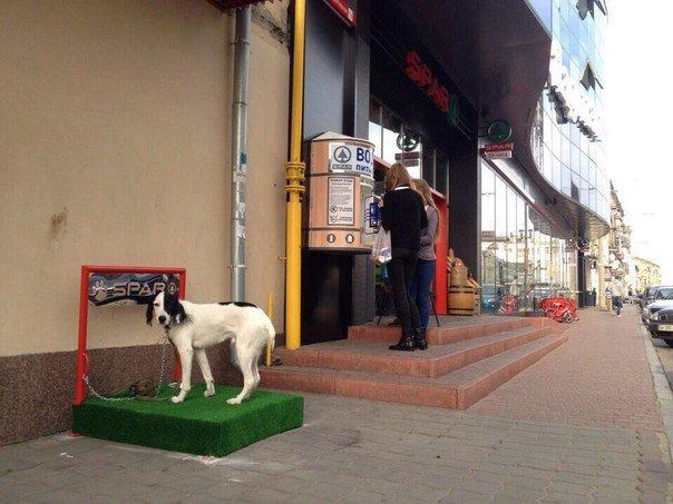 В Харькове появились «парковки» для собак (ФОТОФАКТ) (фото) - фото 1