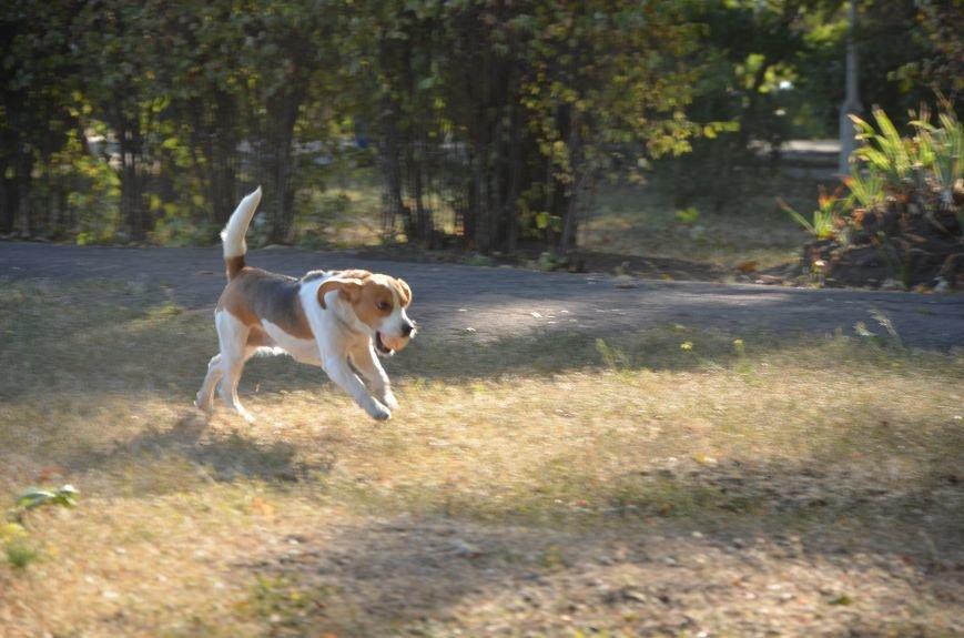 В Мариуполе Всемирный день психического здоровья провели с играми и собаками (ФОТО+ВИДЕО), фото-12