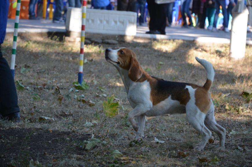 В Мариуполе Всемирный день психического здоровья провели с играми и собаками (ФОТО+ВИДЕО), фото-16
