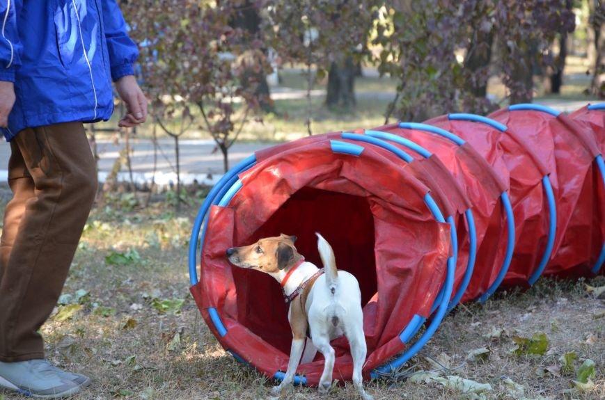 В Мариуполе Всемирный день психического здоровья провели с играми и собаками (ФОТО+ВИДЕО), фото-17