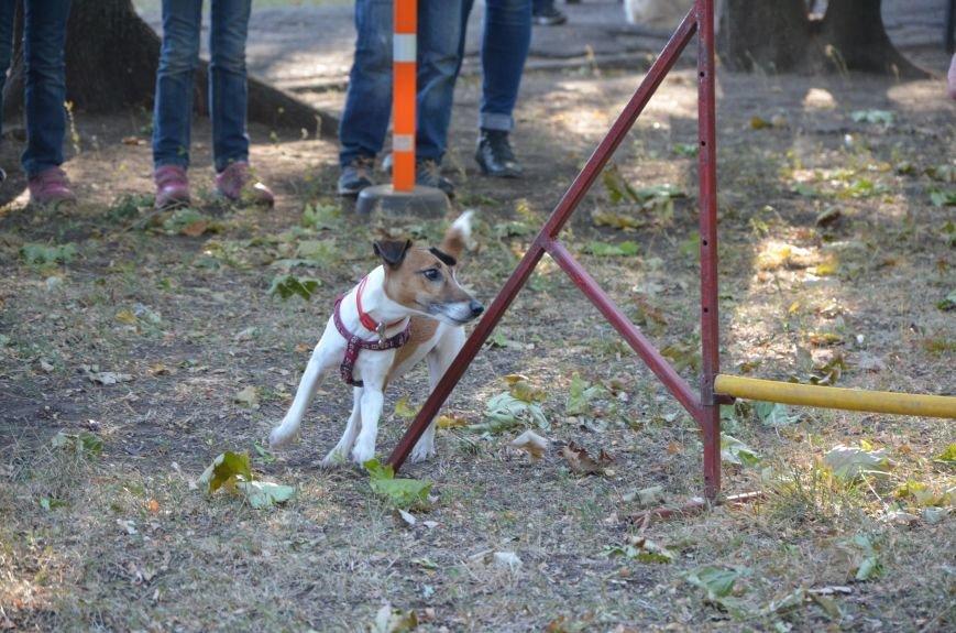 В Мариуполе Всемирный день психического здоровья провели с играми и собаками (ФОТО+ВИДЕО), фото-20