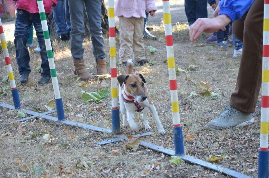 В Мариуполе Всемирный день психического здоровья провели с играми и собаками (ФОТО+ВИДЕО), фото-21