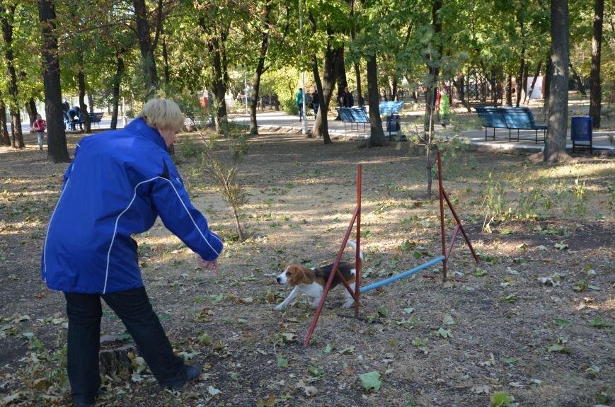 В Мариуполе Всемирный день психического здоровья провели с играми и собаками (ФОТО+ВИДЕО), фото-14
