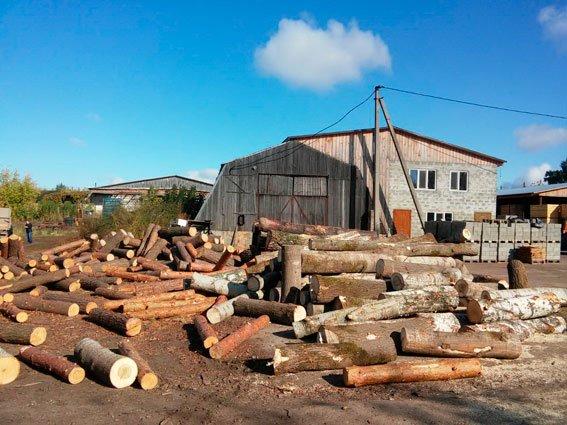 Незаконная пилорама в Черниговской области нанесла убытков на сотни тысяч гривен (фото) - фото 1