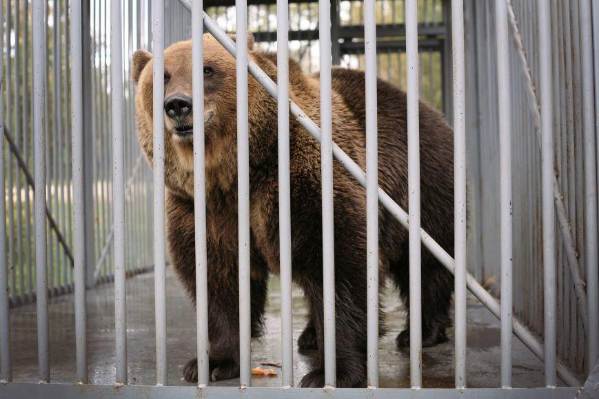 Медведица Маша переехала из Люберец в Калужскую область (фото) - фото 3