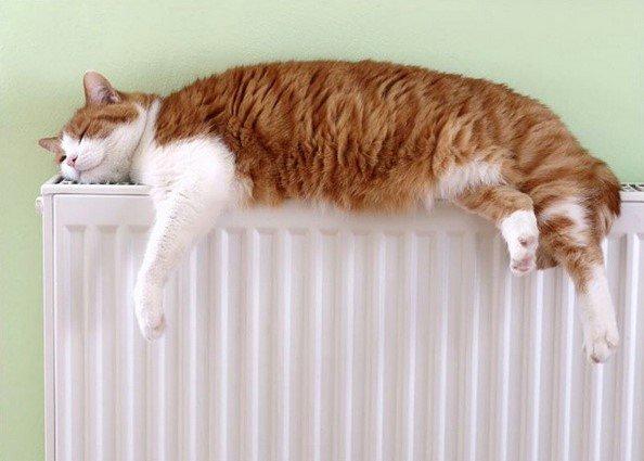 Почему отопление в Пушкине включают десять дней?, фото-1