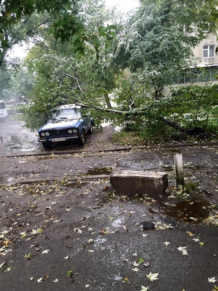 Через негоду у Львові на припаркований автомобіль впало дерево (ФОТО) (фото) - фото 1