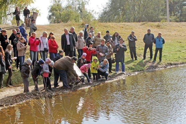 У Полтавському дендропарку з'явилася пара чорних лебедів (ФОТО), фото-4