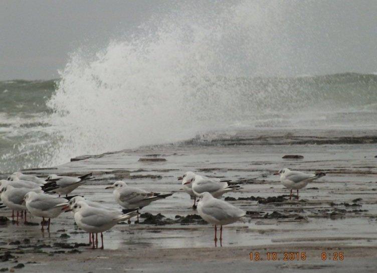 Одесситы делают ошеломляющие снимки шторма на море (ФОТО, ВИДЕО) (фото) - фото 2