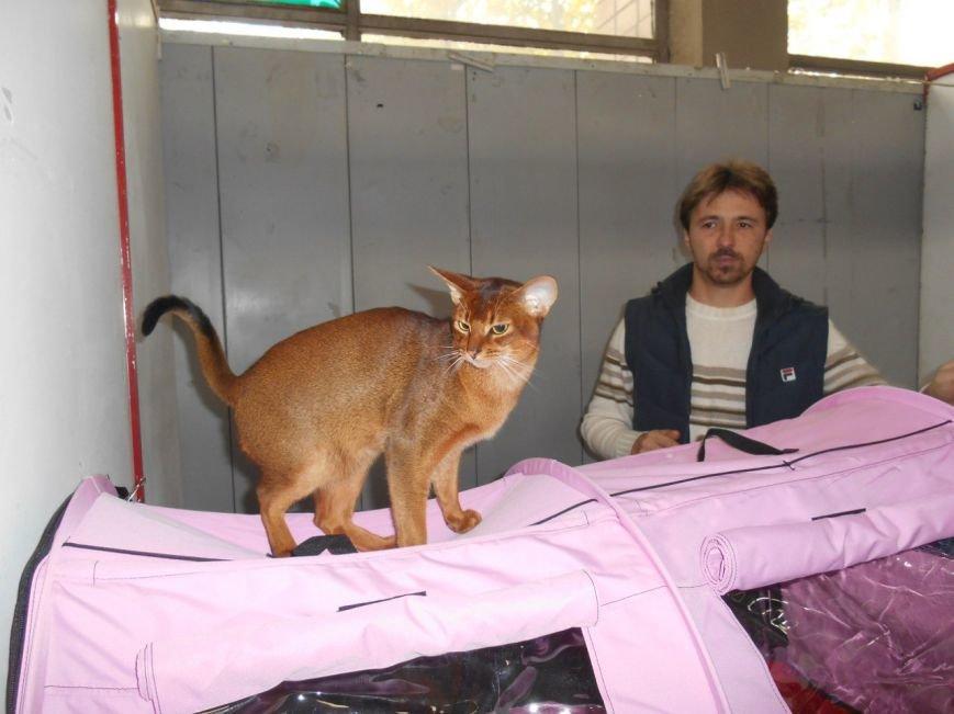 В Николаеве прошла международная выставка кошек (ФОТО) (фото) - фото 5