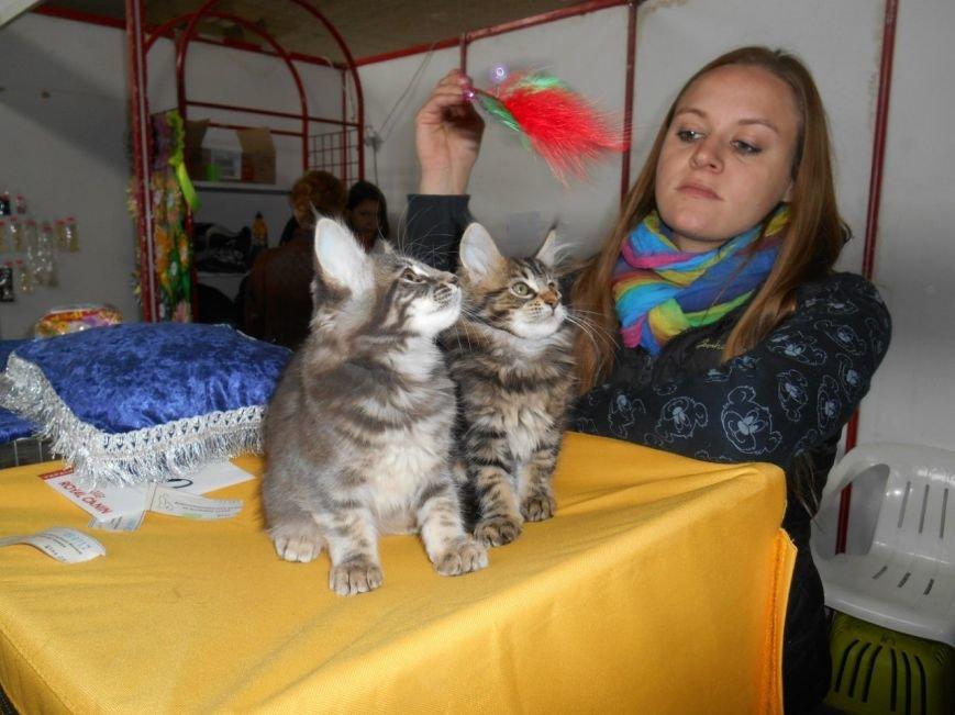 В Николаеве прошла международная выставка кошек (ФОТО) (фото) - фото 4