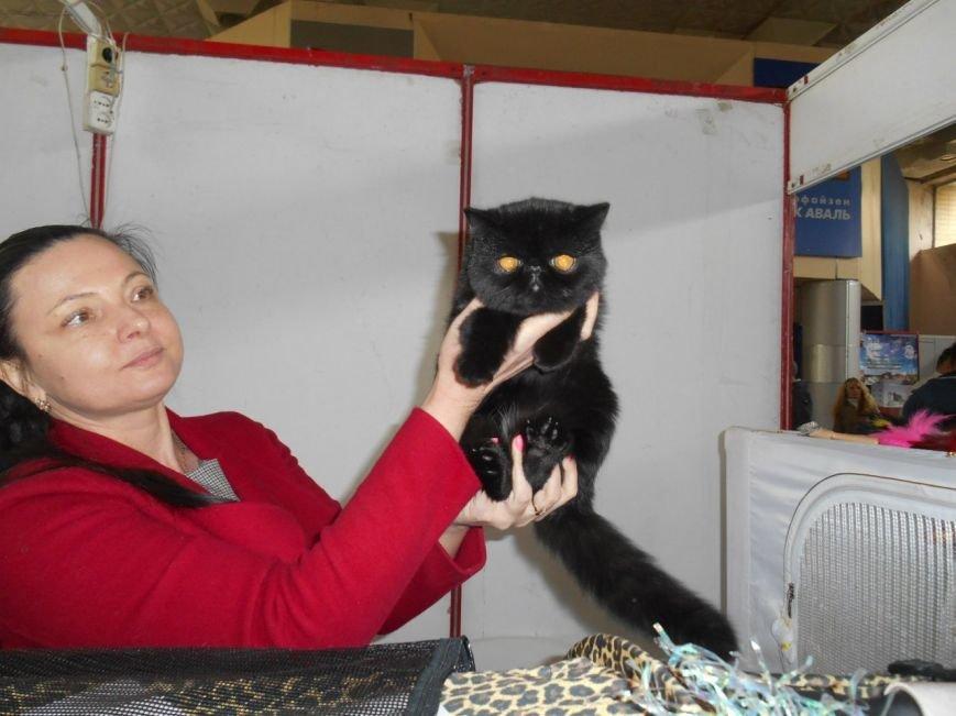 В Николаеве прошла международная выставка кошек (ФОТО) (фото) - фото 8