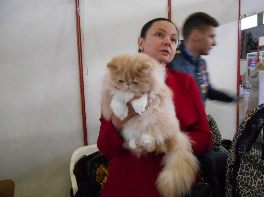 В Николаеве прошла международная выставка кошек (ФОТО) (фото) - фото 1