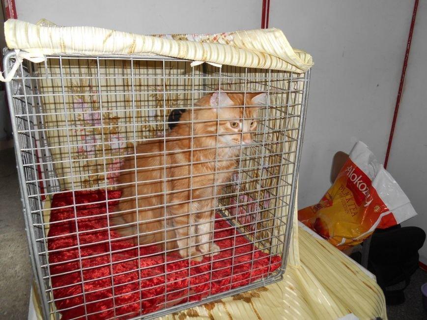 В Николаеве прошла международная выставка кошек (ФОТО) (фото) - фото 7