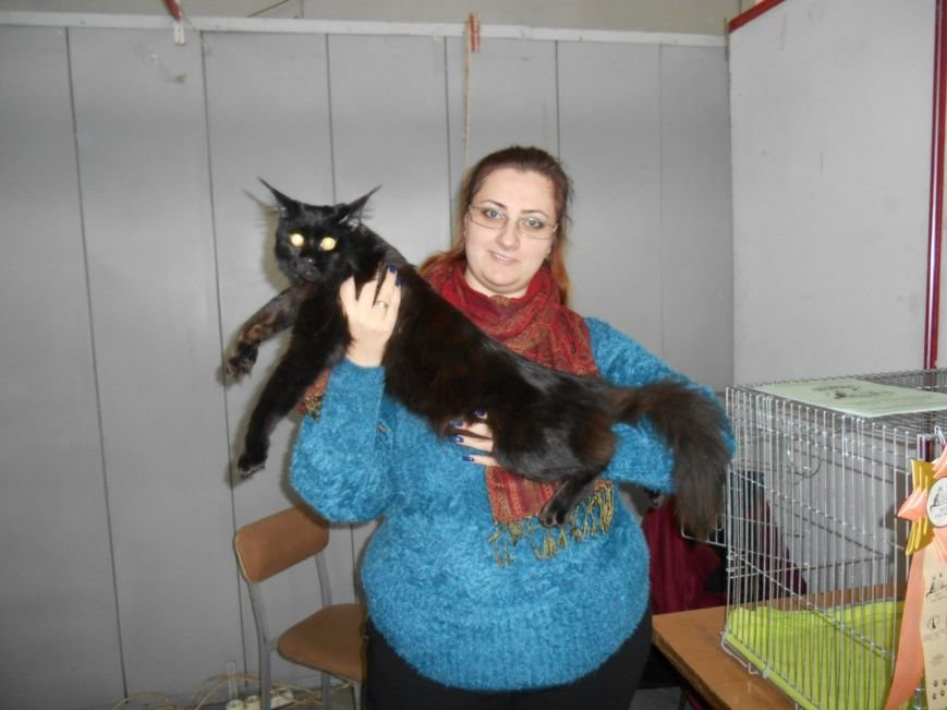 В Николаеве прошла международная выставка кошек (ФОТО) (фото) - фото 6