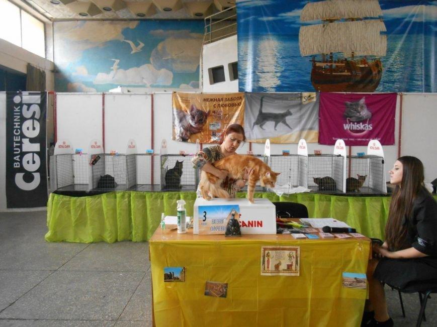 В Николаеве прошла международная выставка кошек (ФОТО) (фото) - фото 9