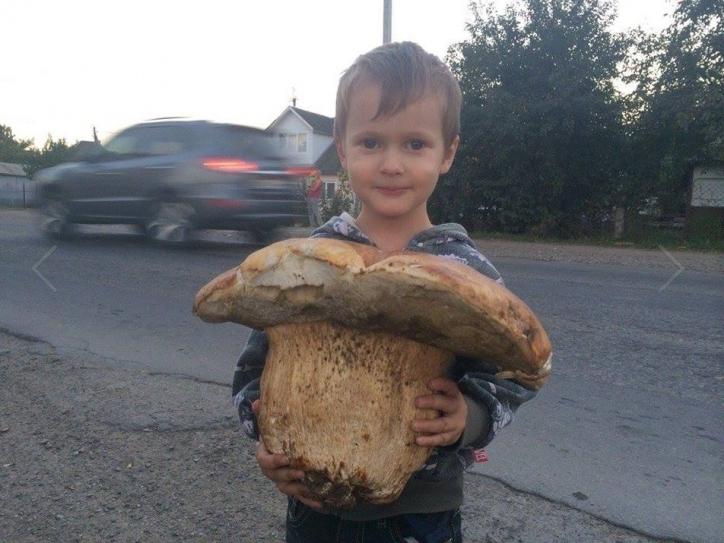 У мережу виклали фото рекордно великого білого гриба (ФОТО), фото-2