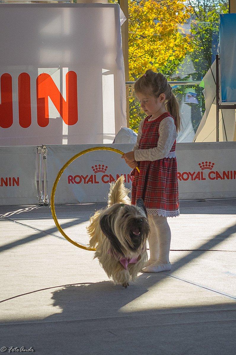 Собаки показали себя в рамках Царскосельского фристайла в Пушкинском доме молодежи (фото) - фото 3