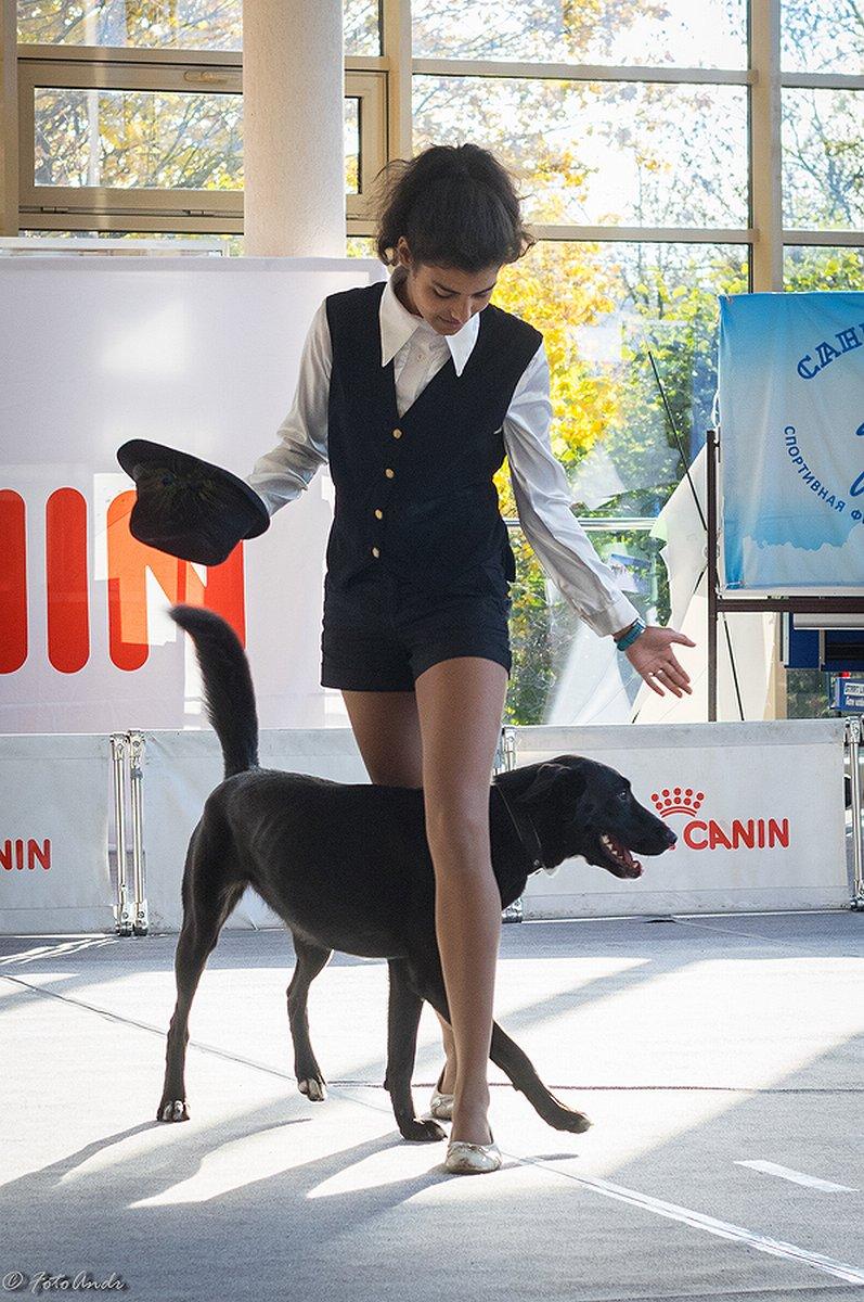 Собаки показали себя в рамках Царскосельского фристайла в Пушкинском доме молодежи (фото) - фото 2