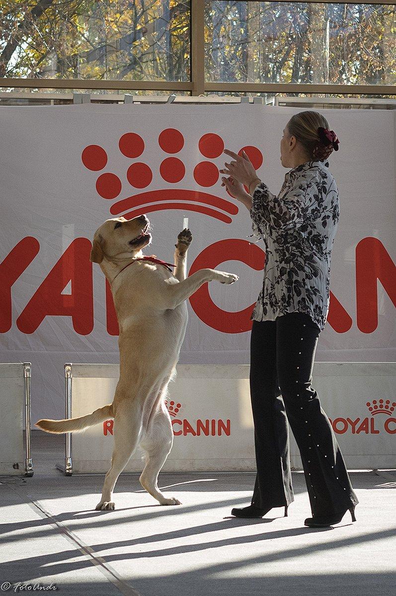 Собаки показали себя в рамках Царскосельского фристайла в Пушкинском доме молодежи (фото) - фото 1