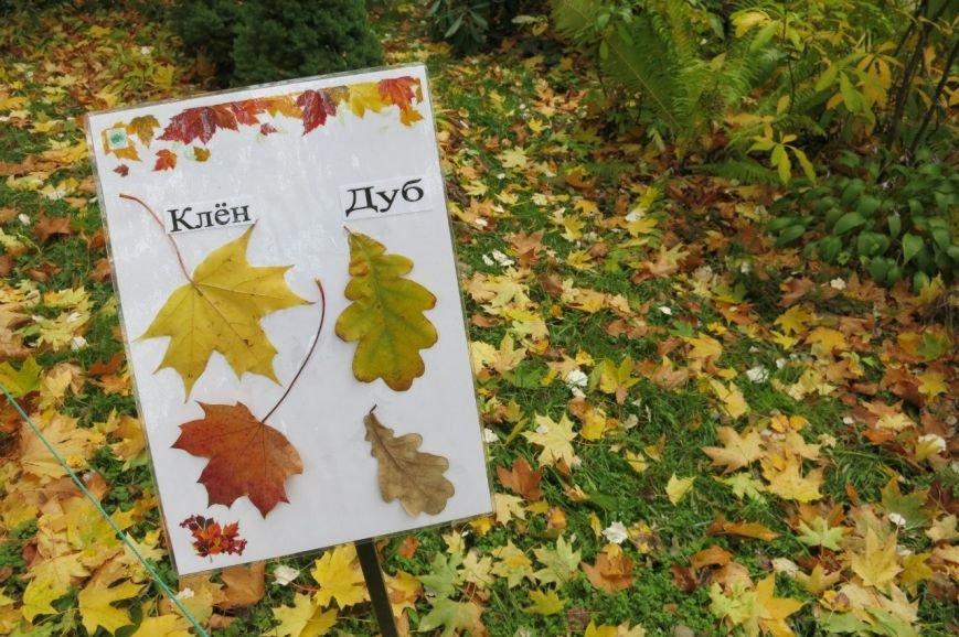 В Ботаническом саду прошел «Бал листопад» (фото) - фото 7