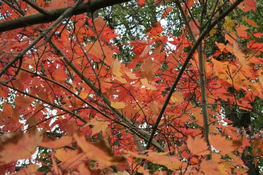 В Ботаническом саду прошел «Бал листопад» (фото) - фото 4