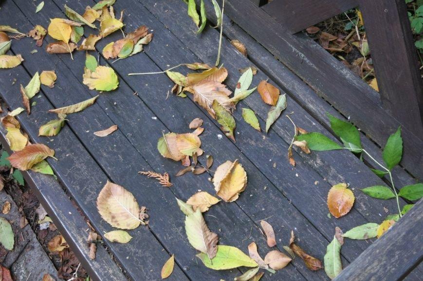 В Ботаническом саду прошел «Бал листопад» (фото) - фото 5