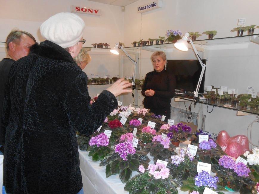 В Днепродзержинске открылась уникальныя выставка фиалок (фото) - фото 9