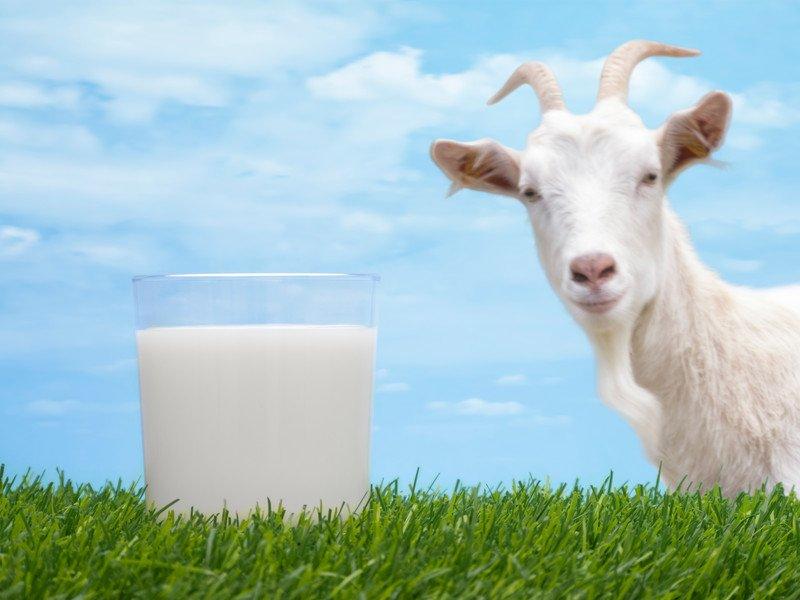 козье-молоко-2