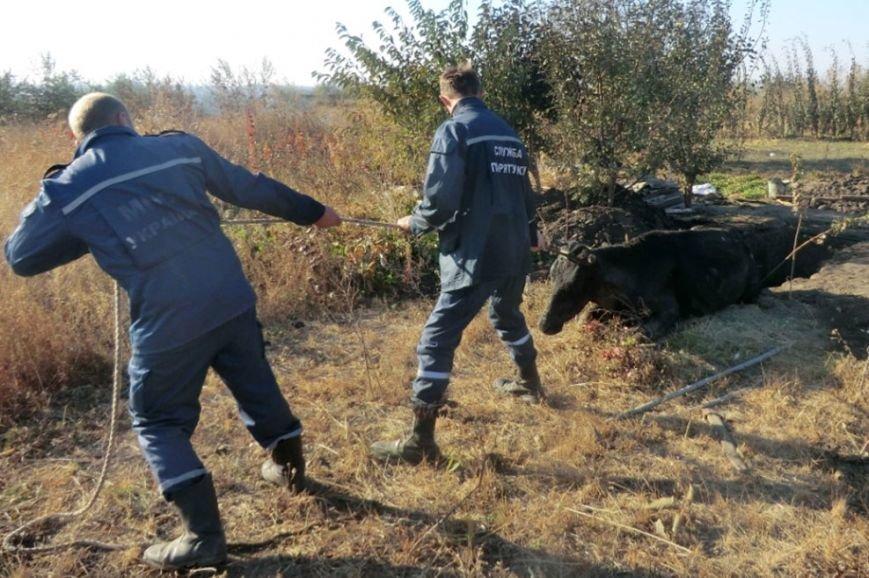 На Днепропетровщине спасатели предотвратили гибель коровы (ФОТО) (фото) - фото 1