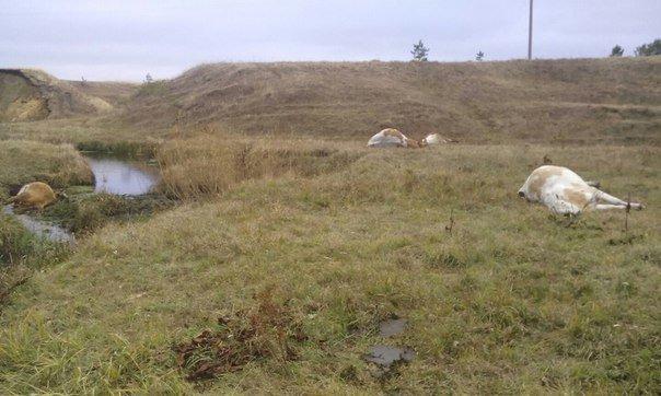 Землю Ульяновской области усыпали трупами животных (фото) - фото 1