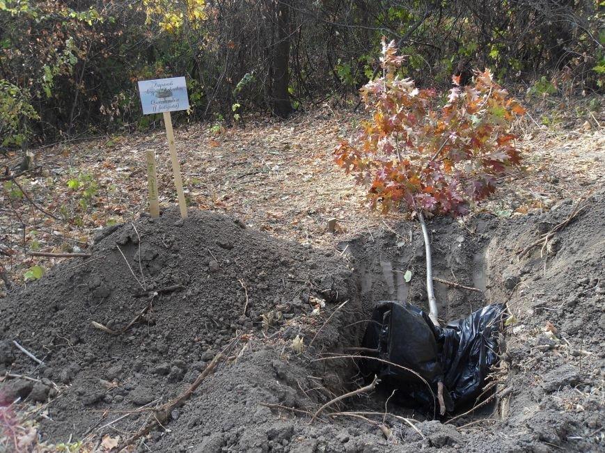 У Полтаві посадили Іменну Алею (ФОТО) (фото) - фото 3