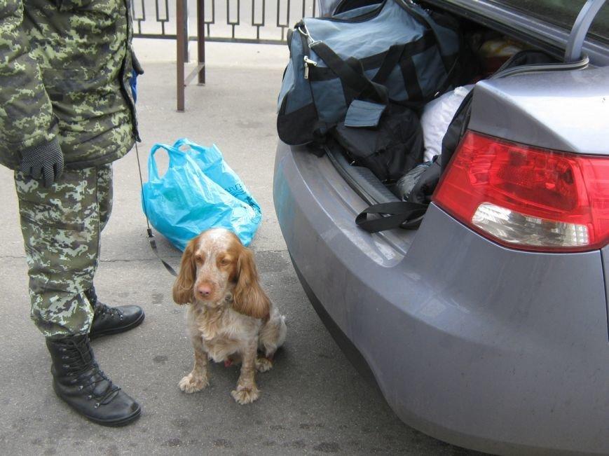 Харьковские пограничники не дали провезти наркотики через «Гоптовку»: собаки учуяли контрабанду (ФОТО) (фото) - фото 1