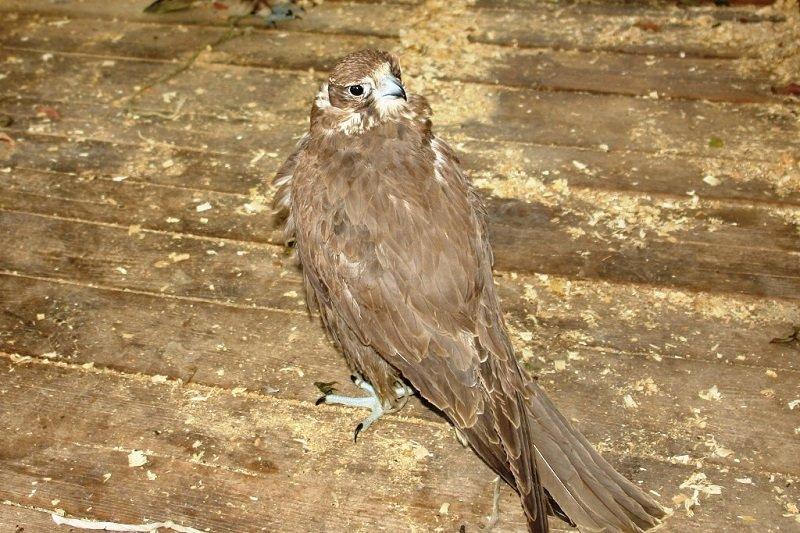В Белгородской области задержаны перевозившие редких птиц контрабандисты (фото) - фото 2