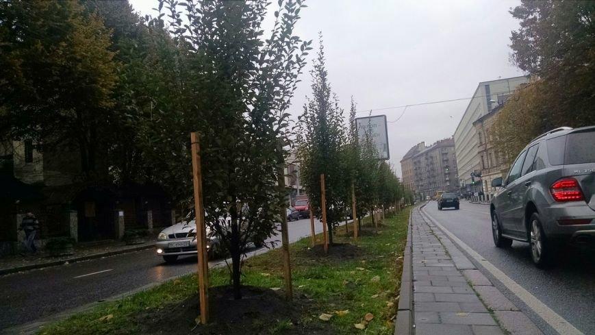 На проспекті Чорновола висадили нові дерева (ФОТО) (фото) - фото 2