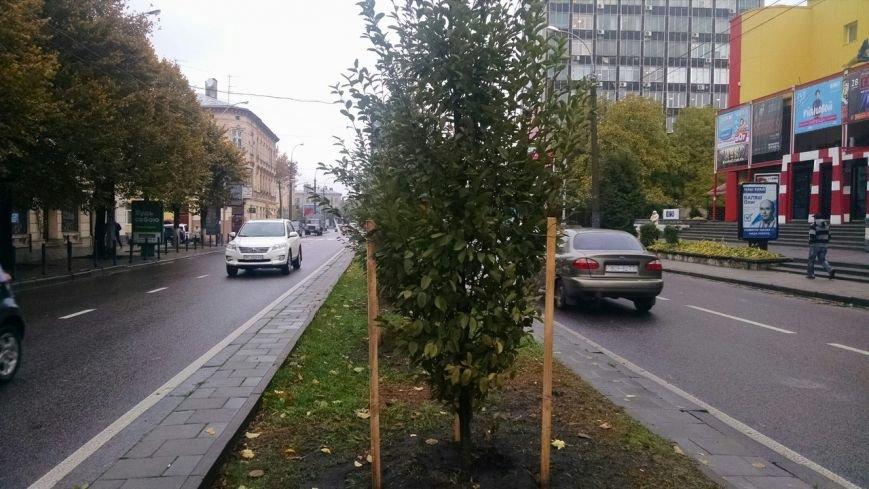 На проспекті Чорновола висадили нові дерева (ФОТО) (фото) - фото 1