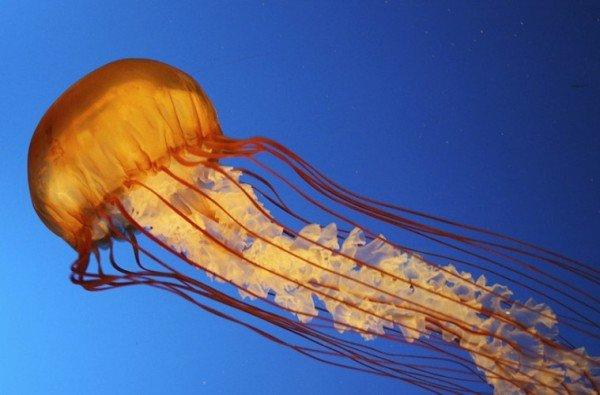 Jellyfish_logo-759x500