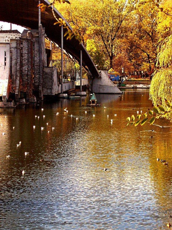 Осень в Днепропетровске: самые красивые парки и скверы (ФОТО) (фото) - фото 1