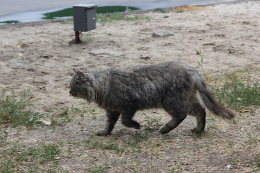 Четырехлапый Днепр: как живется животным на улицах города (ФОТО) (фото) - фото 2