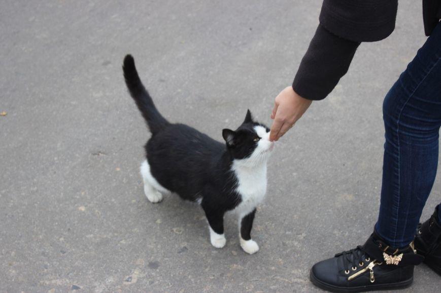 Четырехлапый Днепр: как живется животным на улицах города (ФОТО) (фото) - фото 1